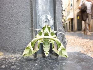 Papillon italien