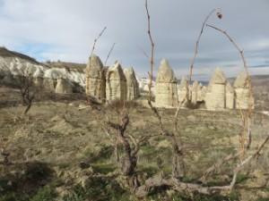 Culture de la vigne en milieu phalique