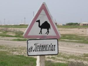 Peut-être des chameaux ?