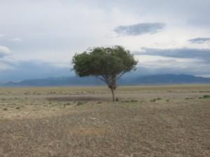 Le seul arbre du Kazakhstan